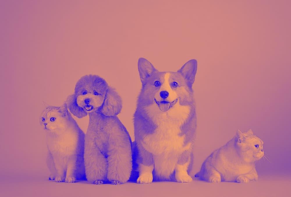 デュオトーンフィルターがかかった犬の写真